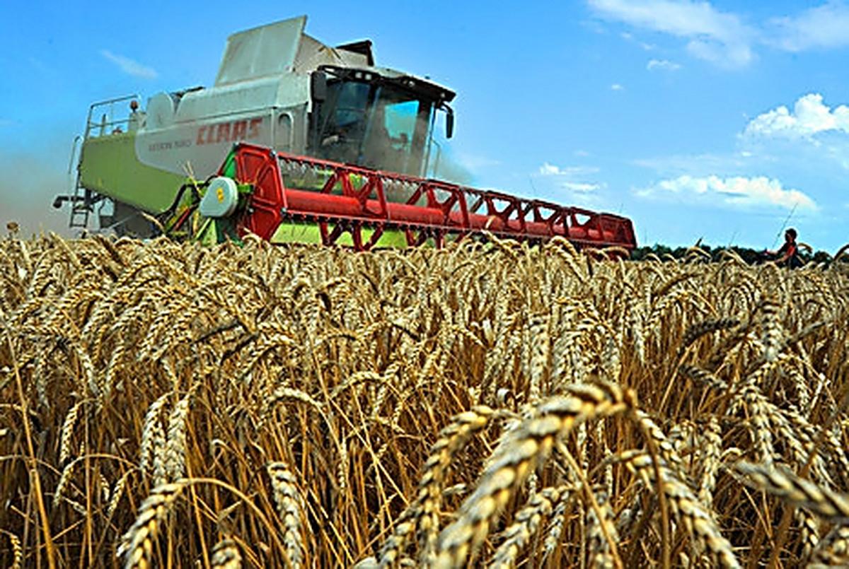 Картинки сельскохозяйственные, рисунки про