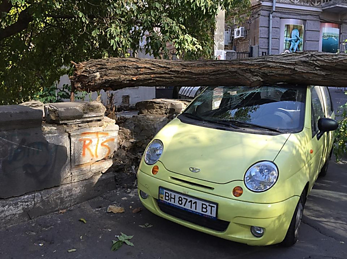 In The Center Of Odessa The Fallen Tree Damaged Two Cars