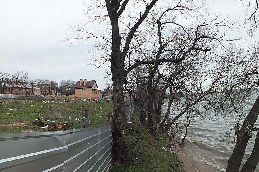 Фото деревьев как они ебутся фото 389-312
