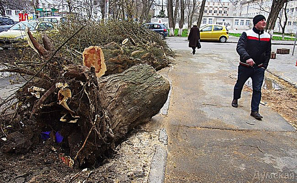From for bad weather 220 trees fell in odessa weather for Motor city bad beat