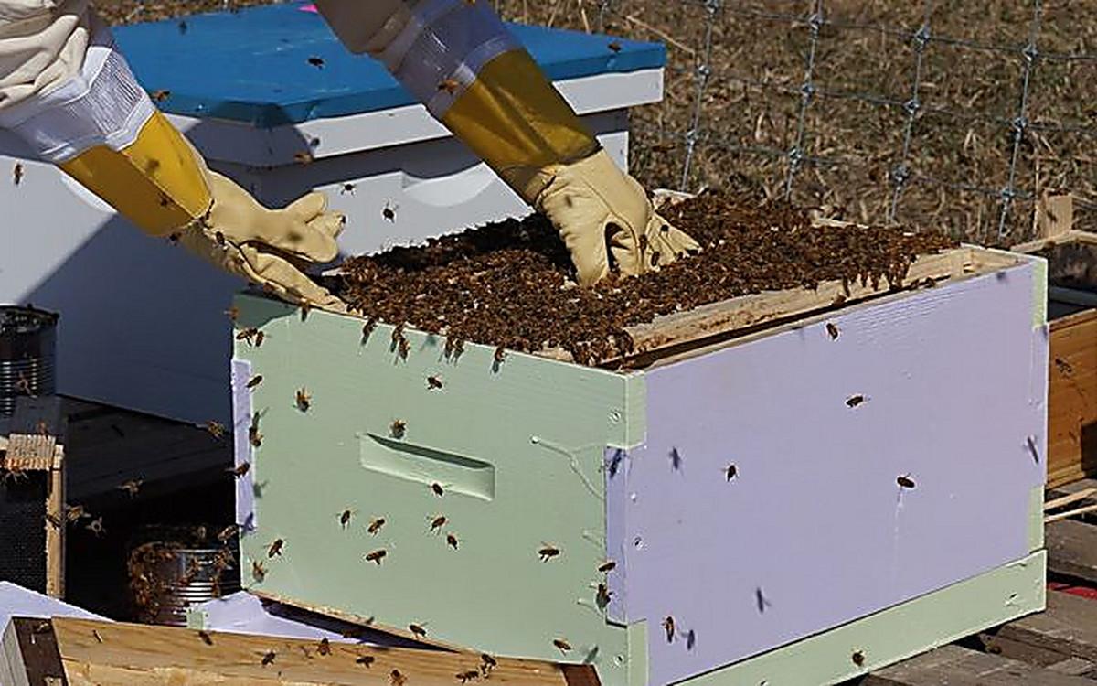 Пчеловодство видео новые записи 2018 ловушка
