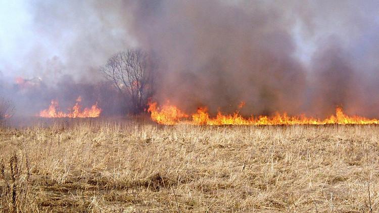 Картинки по запросу пожар сухостоя