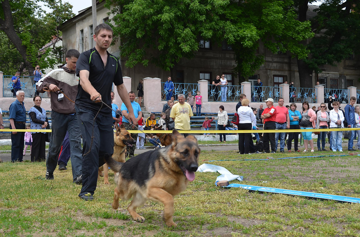 In Nikolaev there took place an exhibition of dogs