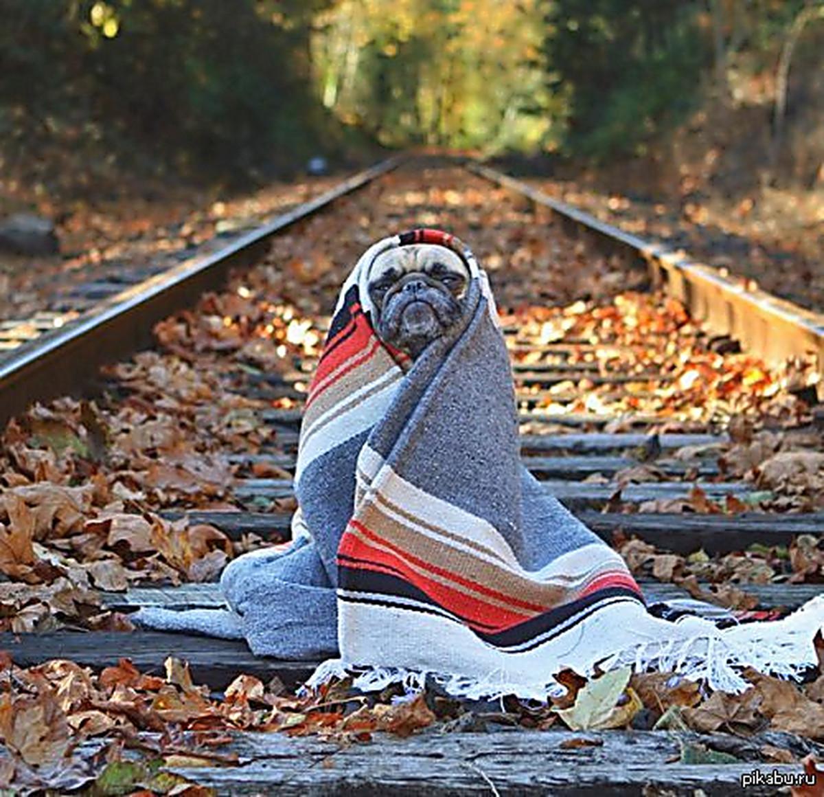 Смешные картинки про холодную осень, для