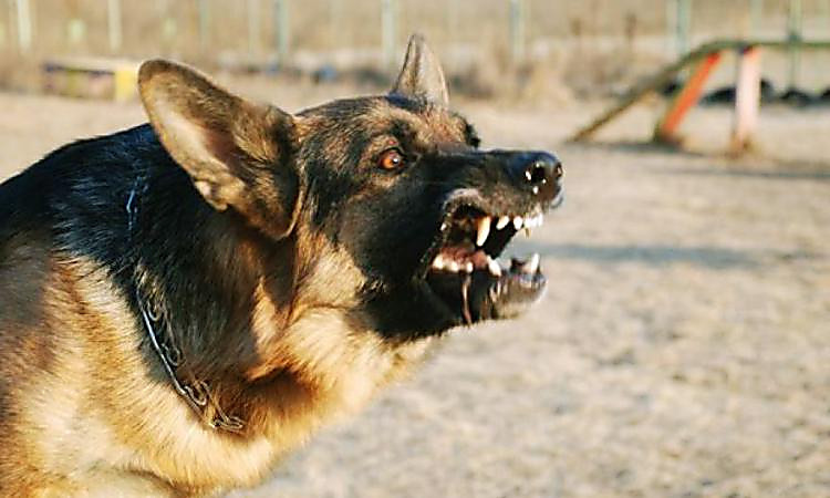 ВХерсонской обл. собаки насмерть загрызли мужчину