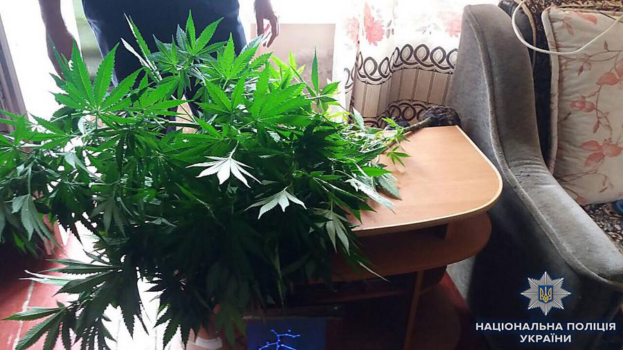 Амфетамин вместе с коноплей уголовная статья за употребление марихуаны